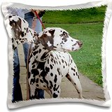 dalmation pillow