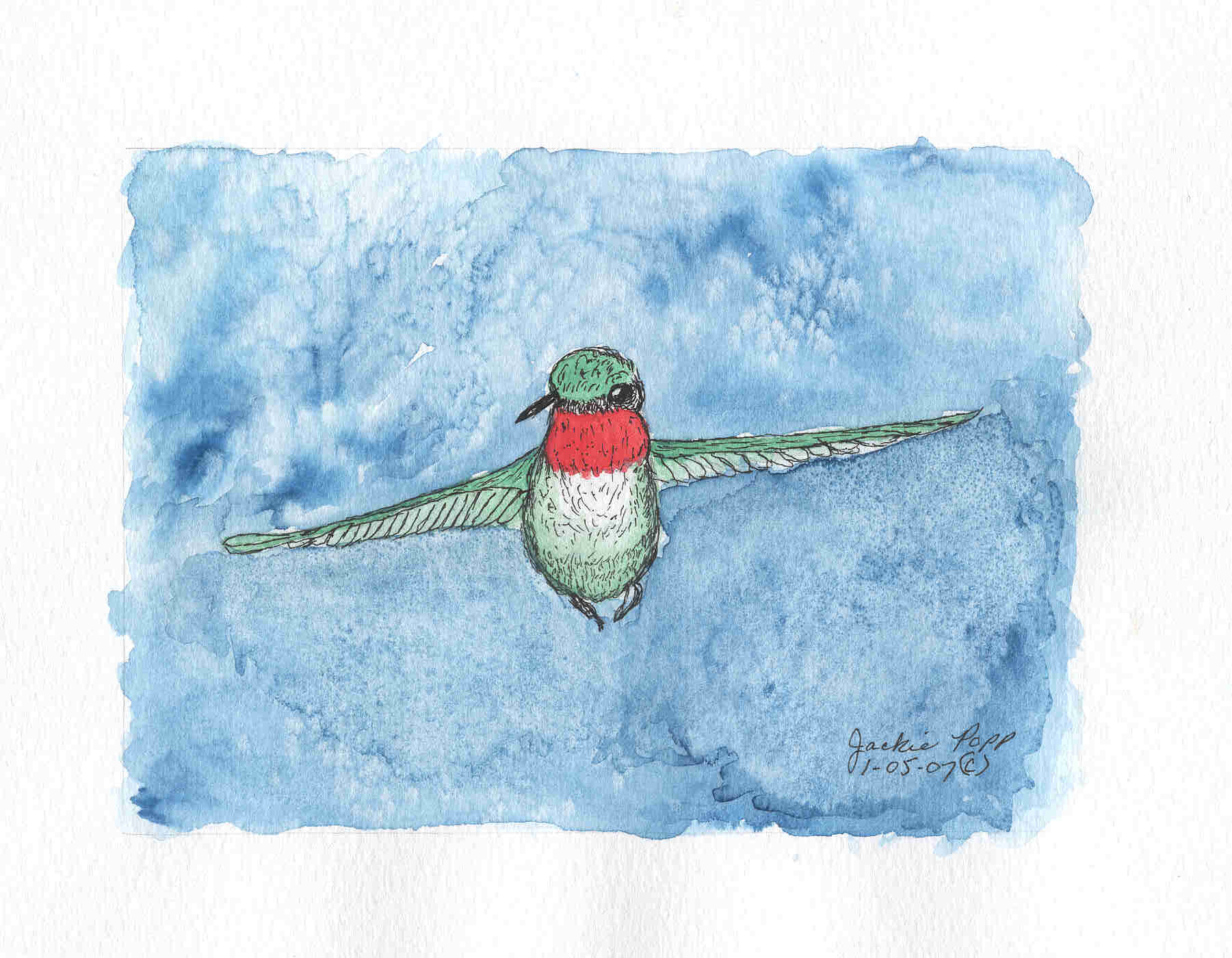 Humming bird in pen and ink watercolor